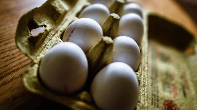 Photo of Insetticida fipronil e uova contaminate. Dov'è iniziato tutto?