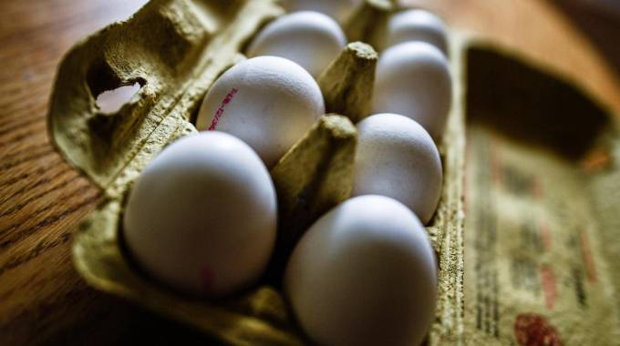 Fipronil con uova
